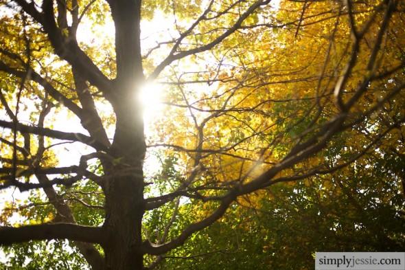 Midwest Fall Tree Fine Art Print