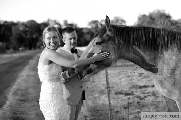 Horses & Bride & Groom, Sonoma CA