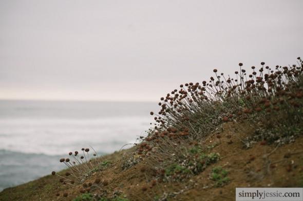 Bay Area Fine Art Nature Photographer
