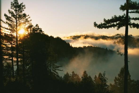 morning fog russian river