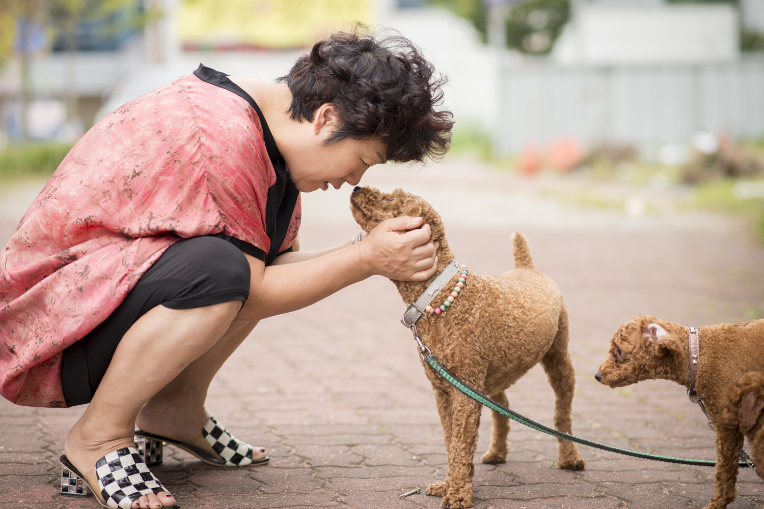Puppy Love in the city of   Mokpo  .