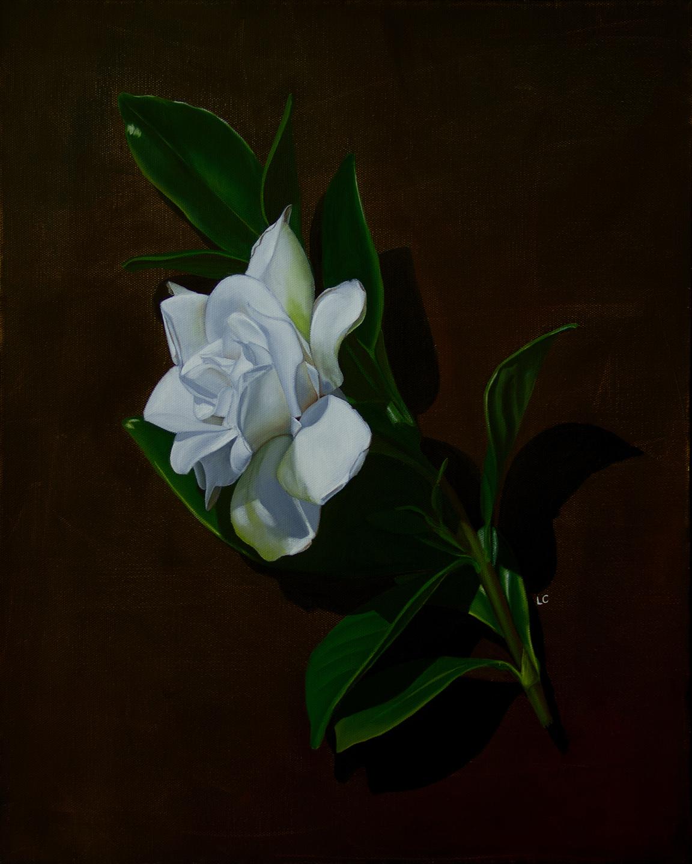 Single Gardenia 3 20x16