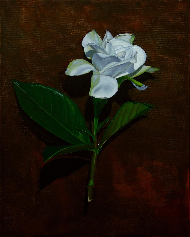 Single Gardenia 4 20x16