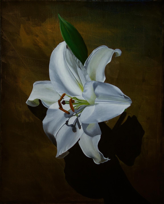 Single Lily 1 20x16