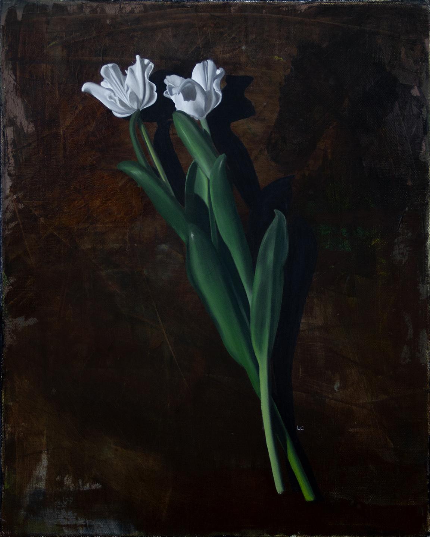 Two Fancy Tulips 20x16