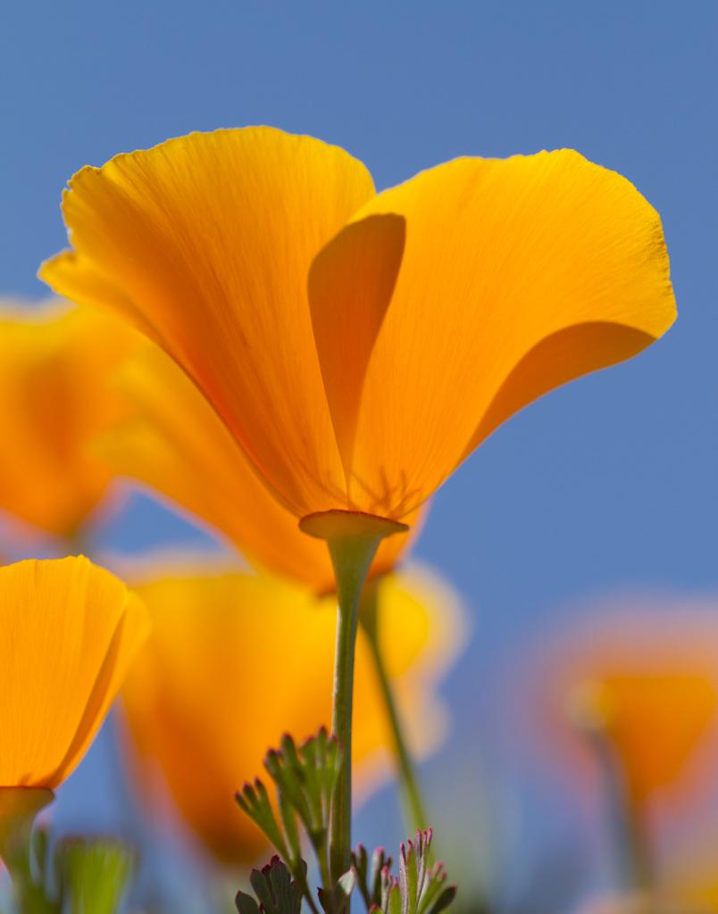 20100329_ShellCreek_Flowers-4-2.jpg