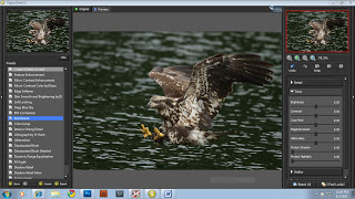 Working on an eagle from one of my Alaska tours.