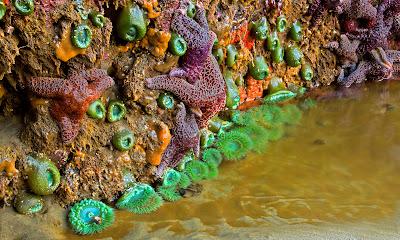 rick_Starfish.jpg