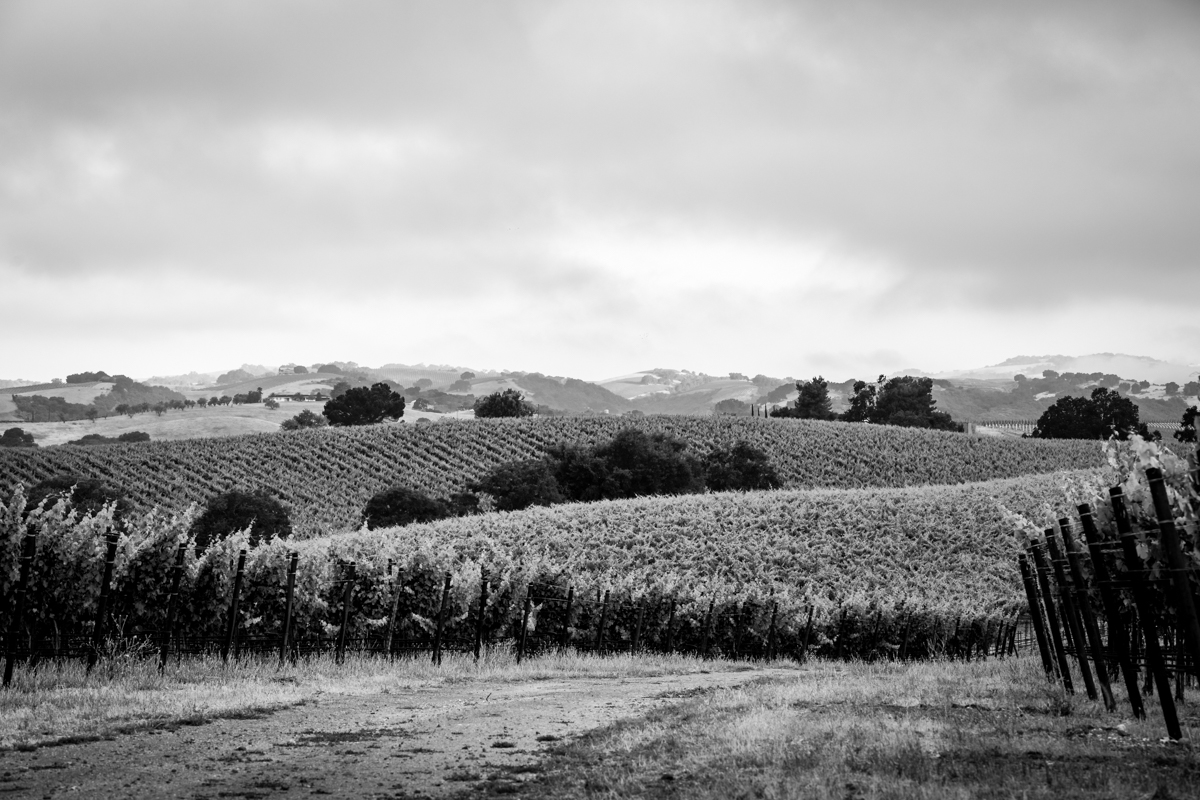 20180618_GatewayVineyard-42-HDR-2.JPG