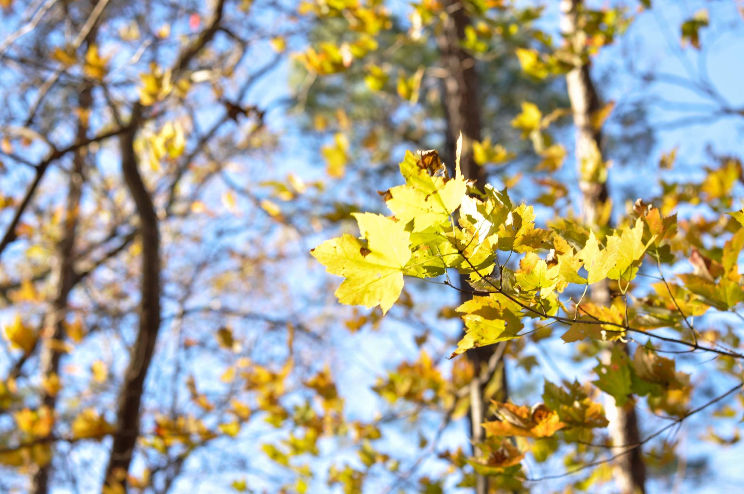 leaves_edit.jpg