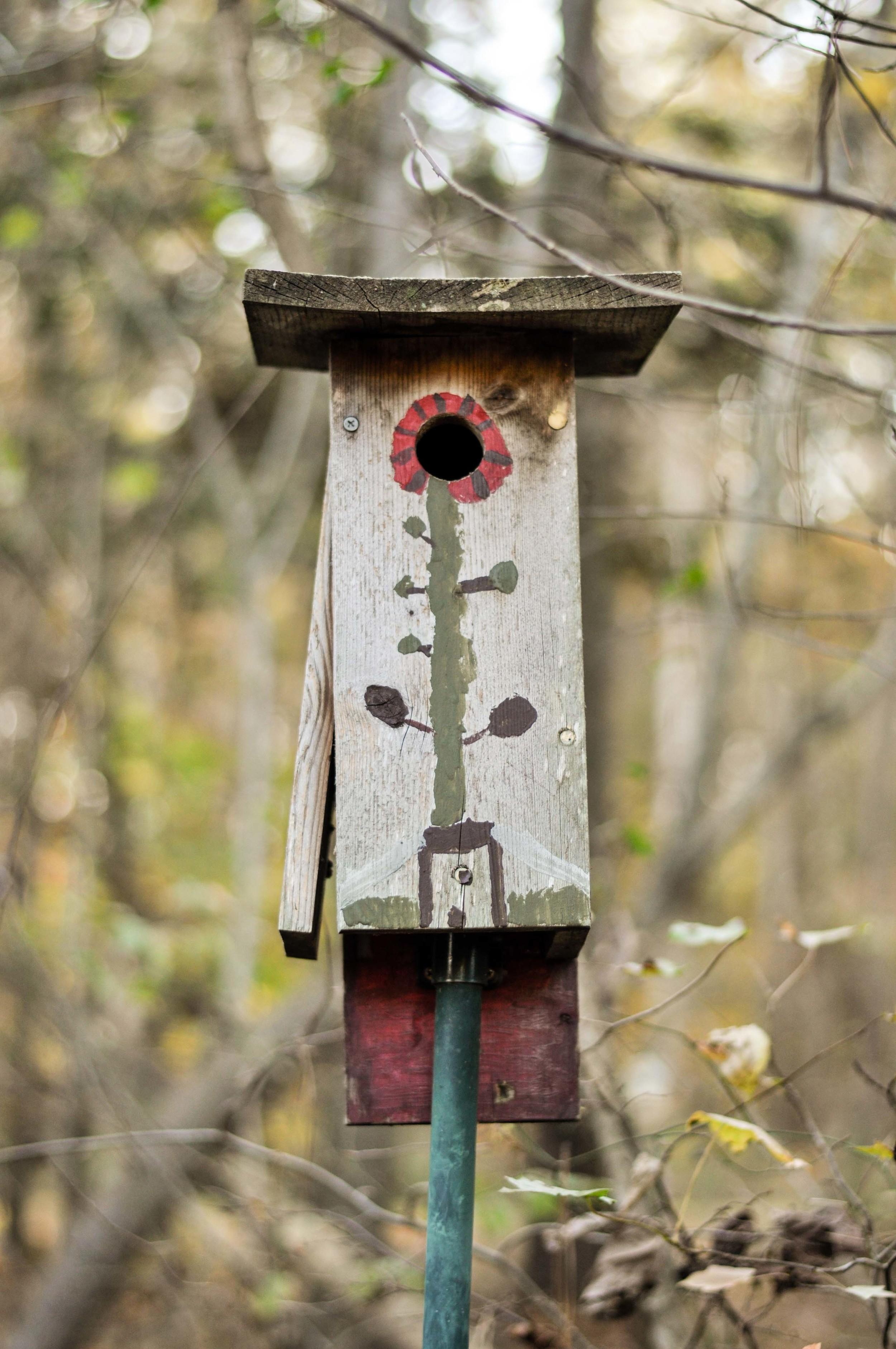 bass lake bird houses_8.jpg