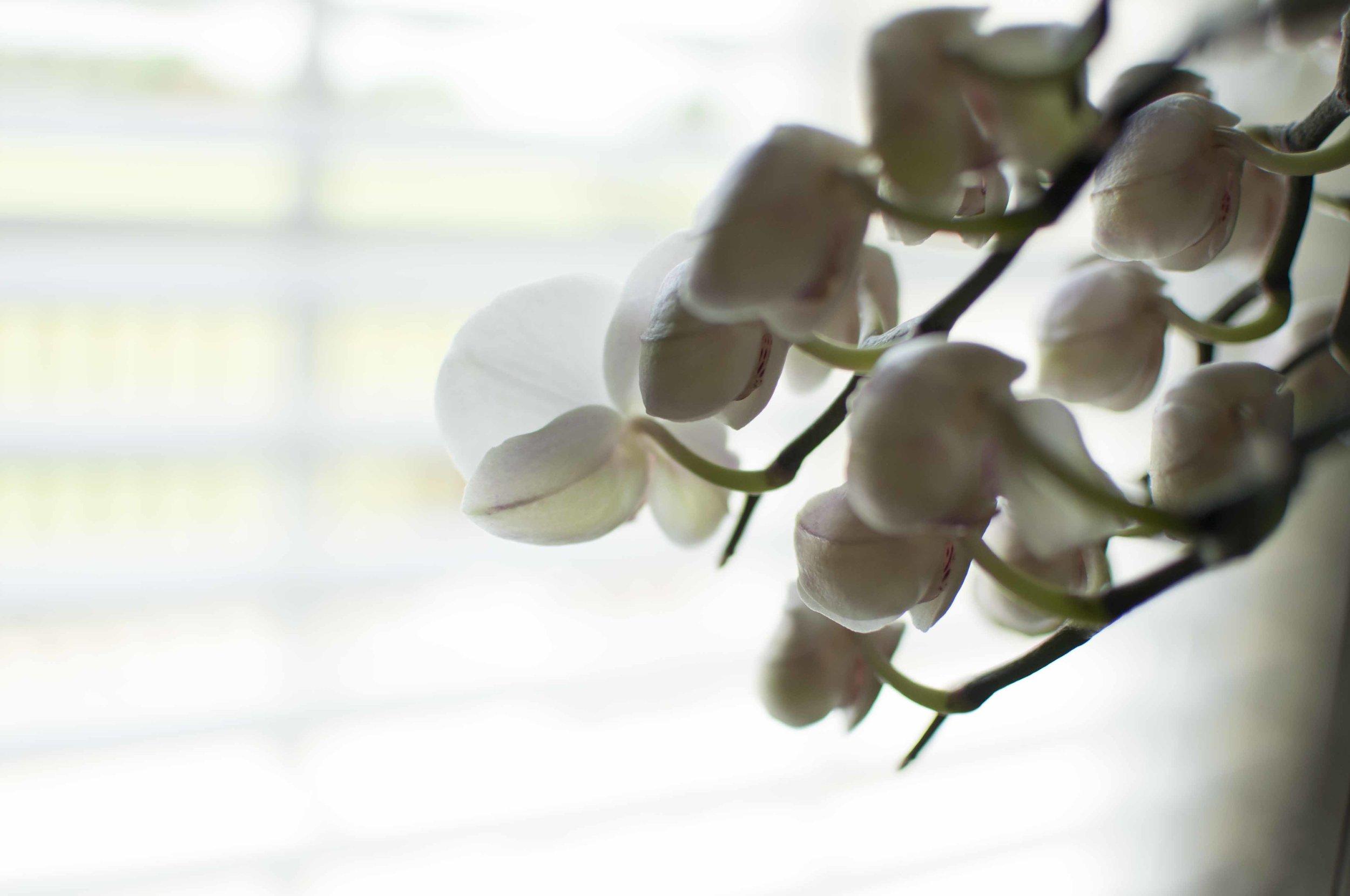 orchid6_17_12.jpg