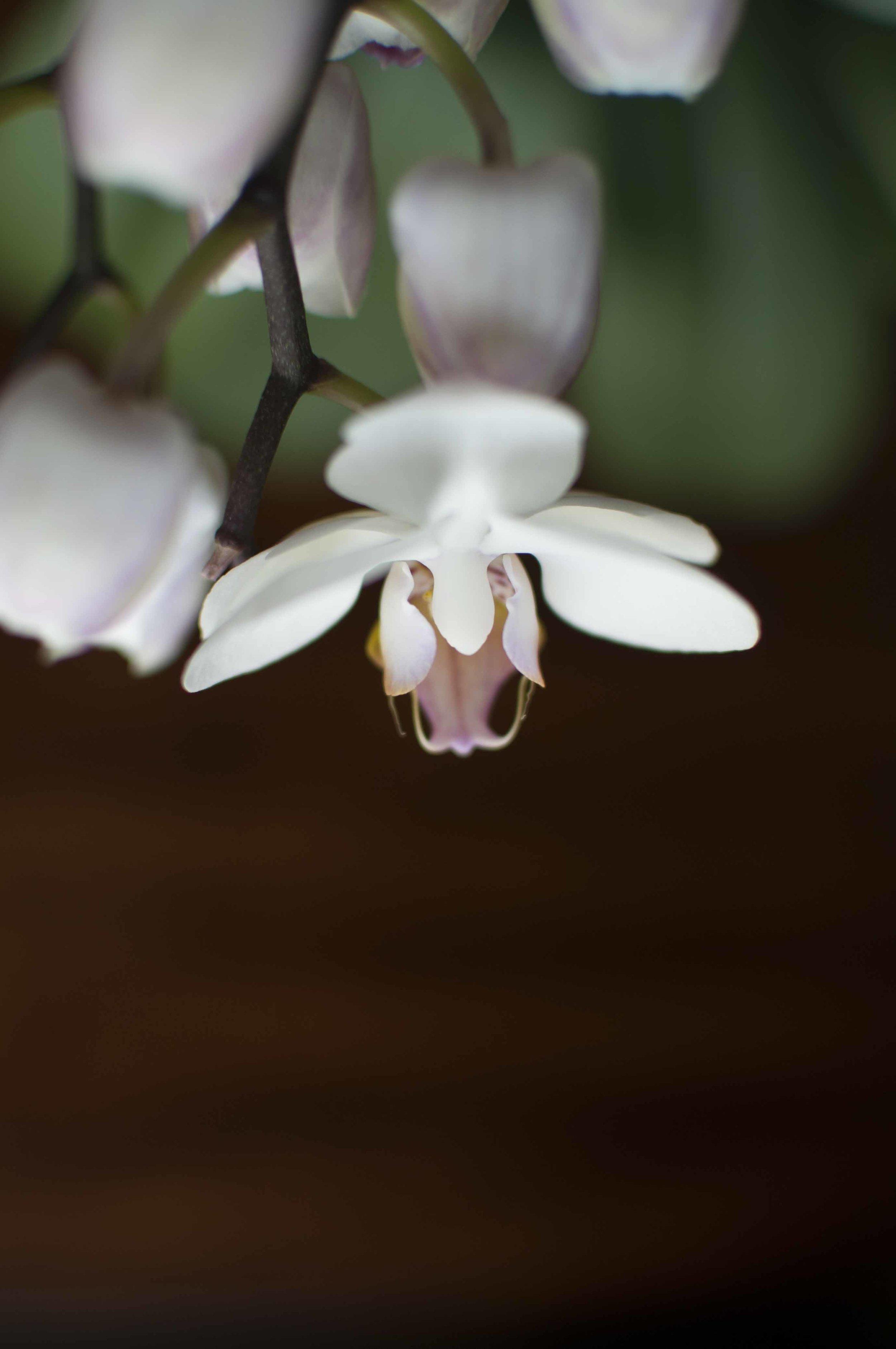 orchid6_17_13.jpg