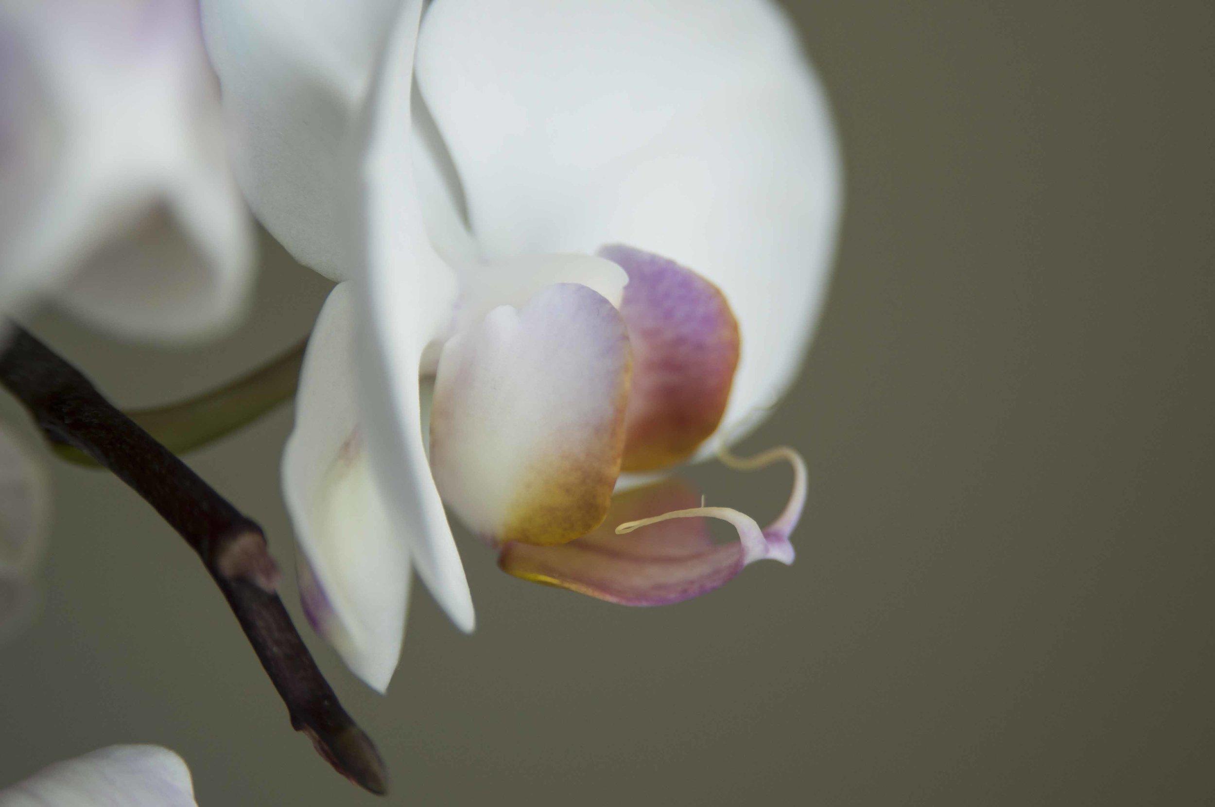 orchid6_17_18.jpg