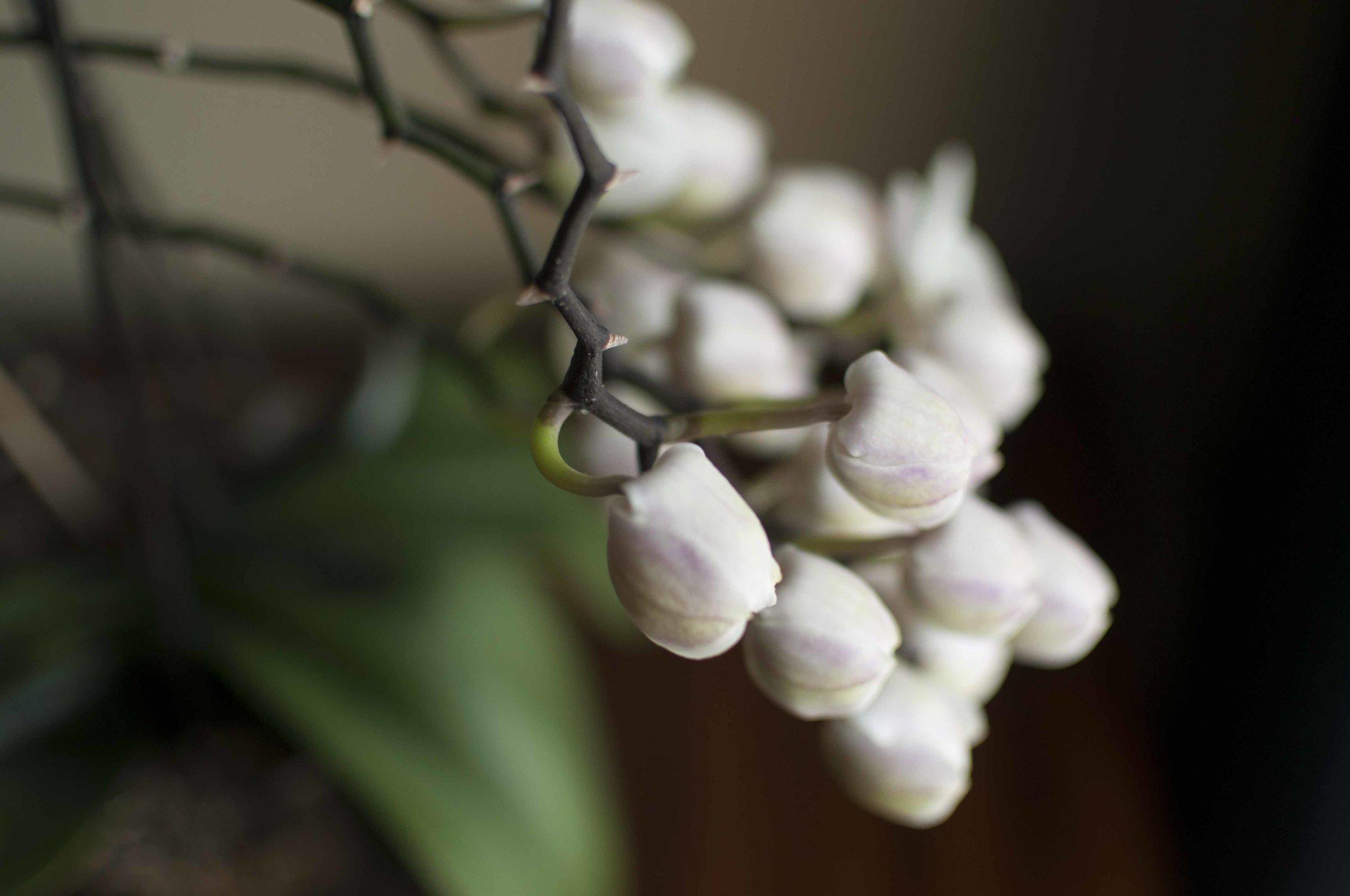 orchid6_17.jpg