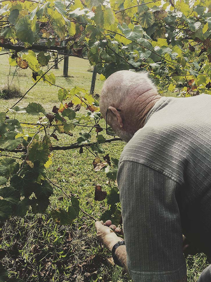 granddad and vineyard.jpg