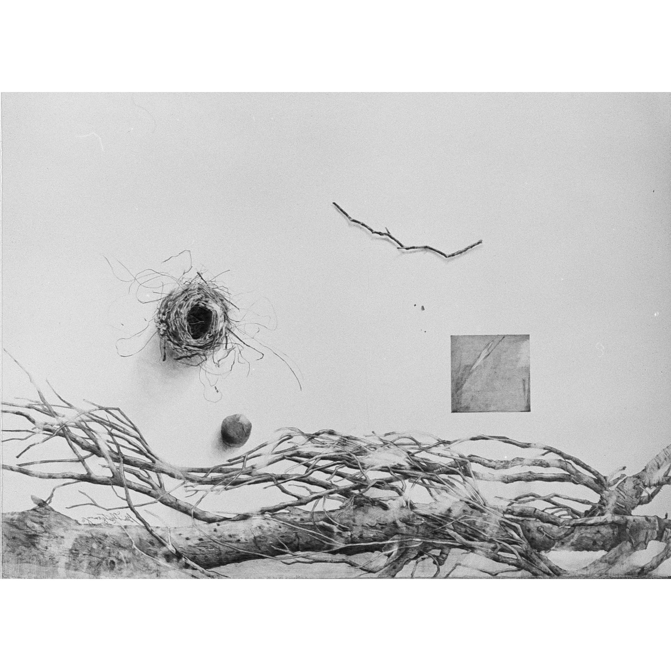 'Bird's Nest'