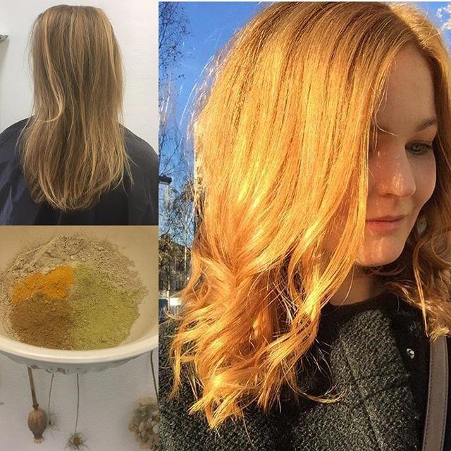 Förvisso en efterbild i gnistrande oktobersol men huuuuur SNYGG ÄR INTE FÄRGEN! (Och superkvinnan)  När älskade stockholmsvännen kommer på besök så bjuds det på pigmentfest med #växtfärgning. Ett trött och slitet hår blev som nytt. Visst vet ni att vi blandar alla våra nyanser med egna recept, liksom hardcore, rena pigment och inget färdigblandat. ✌️Tack @sofiaahedlund 😘❤️ #ekologiskhårvård #örtfärg #frisörumeå #ekologiskfrisör #frisörenkreatören #frisörkreatör #visitumea #cooperhair #copperblonde