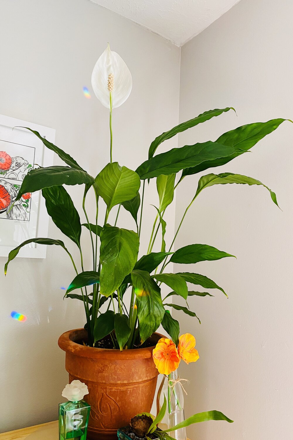 Lauren's photo submission of the peace lily for the Greenhouse print series.