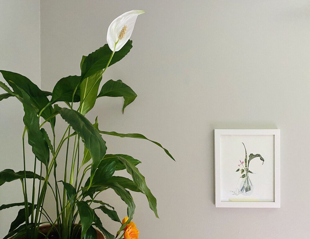 The peace lily lives in Lauren's guest room, along with another  Greenhouse Print  you may recognize!