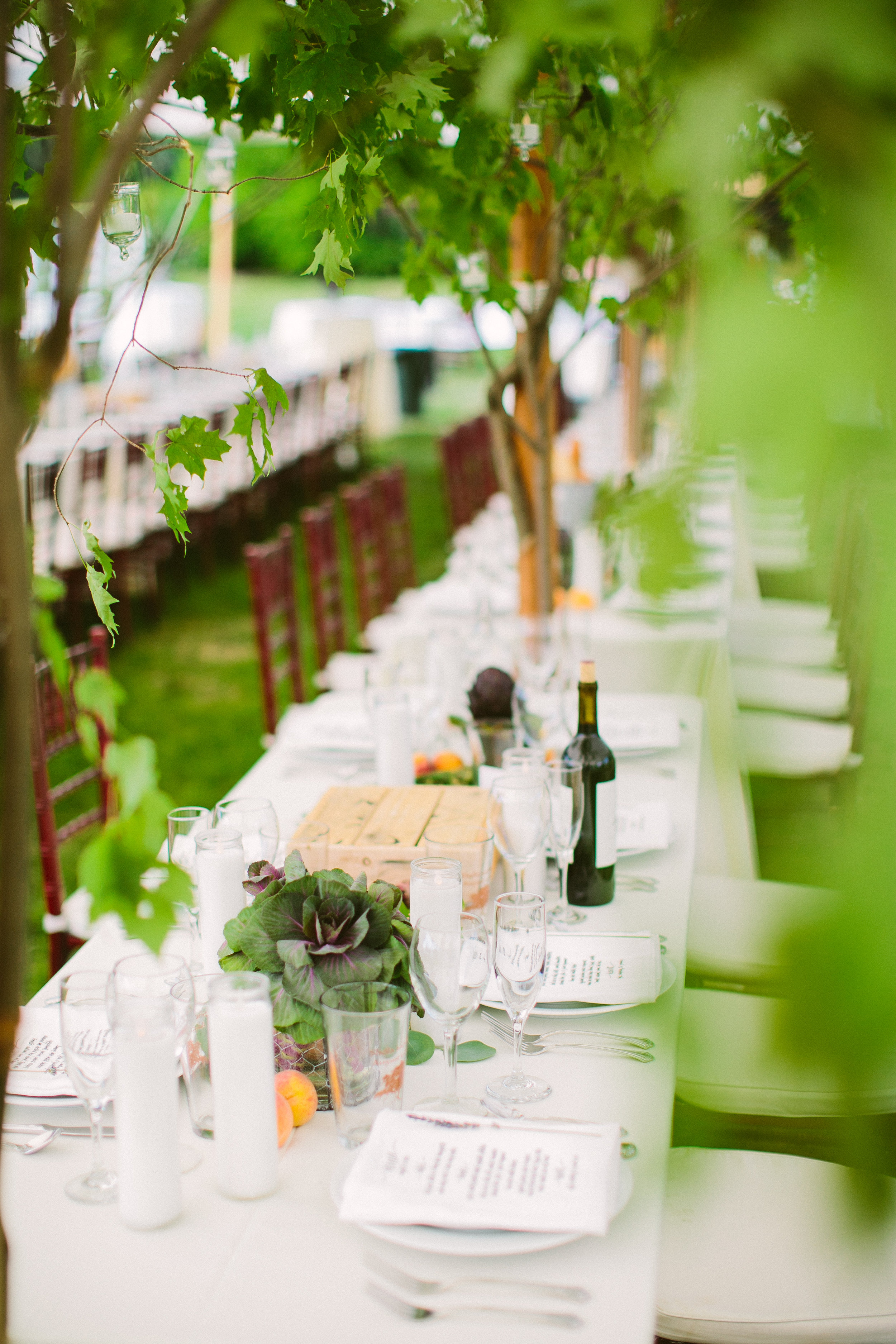 dining under a canopy of trees -