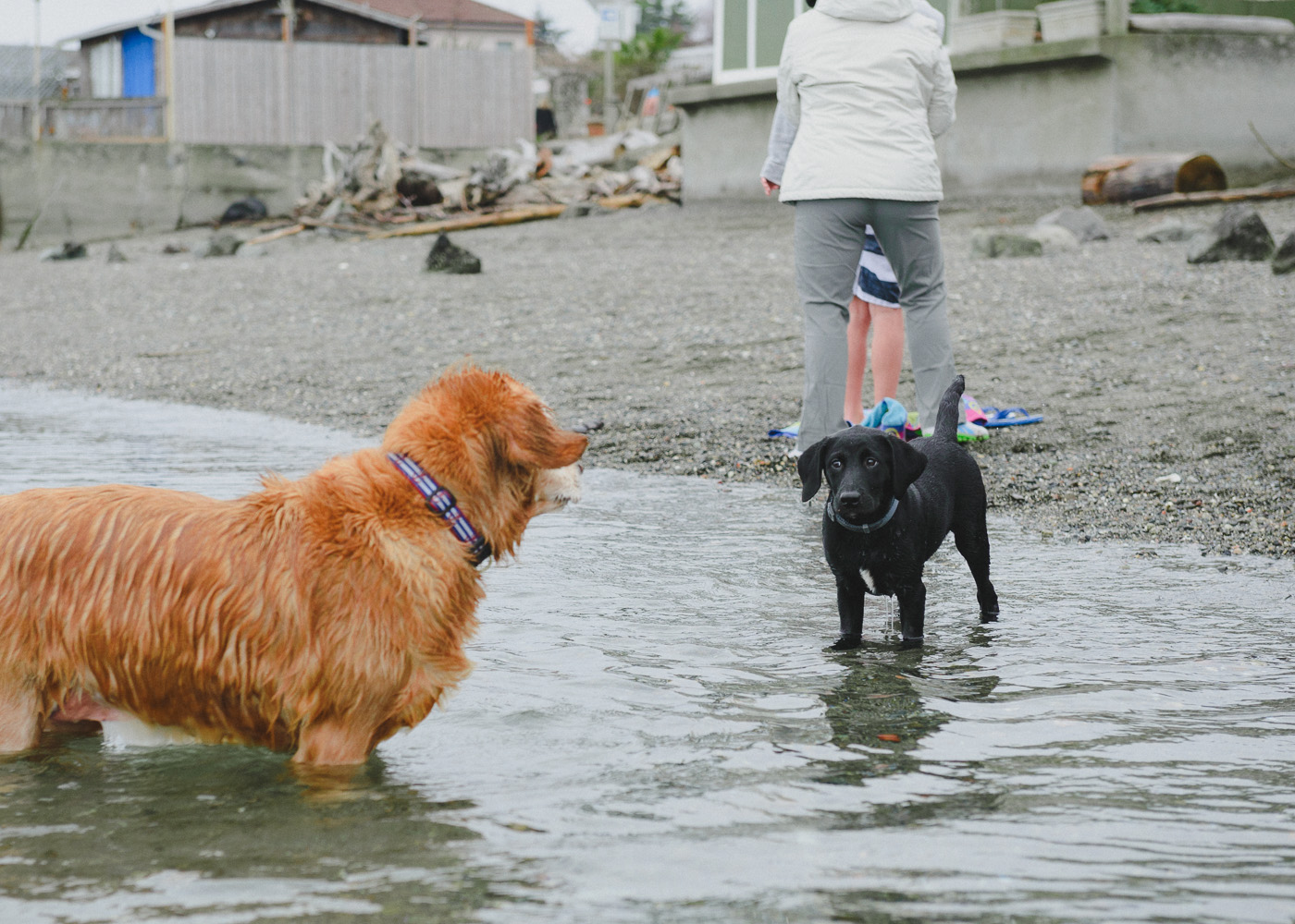 "My dog, the littler one on the right, is not so sure about ""swimming."" A dog after my own heart."