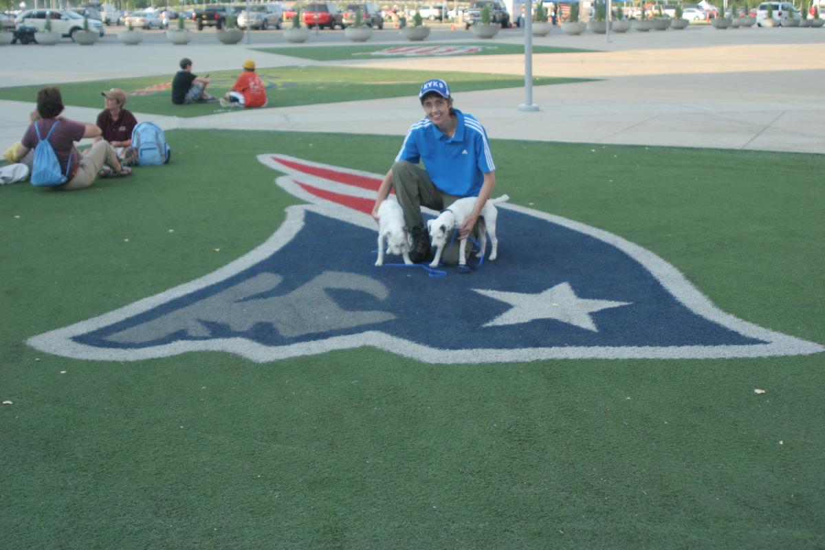 Remy and Scout sniffing the turf at Gillette Stadium