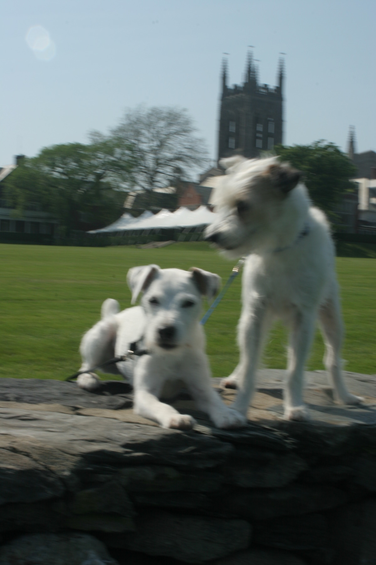 Remy and Scout at St. George's School