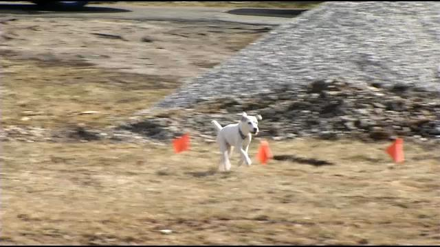 scout running at serach site.jpg