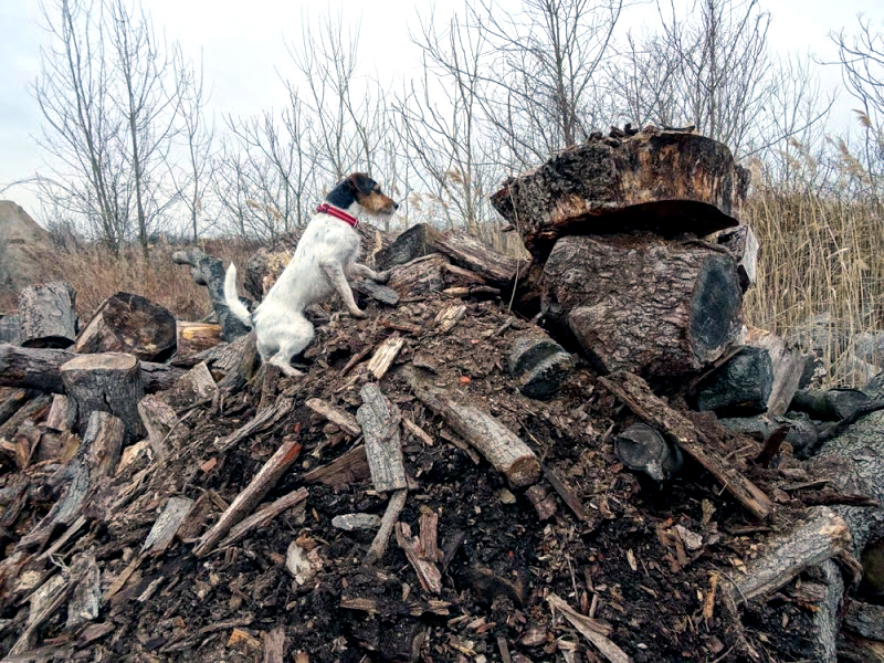rubble wood pile 16 king of the mountain.JPG