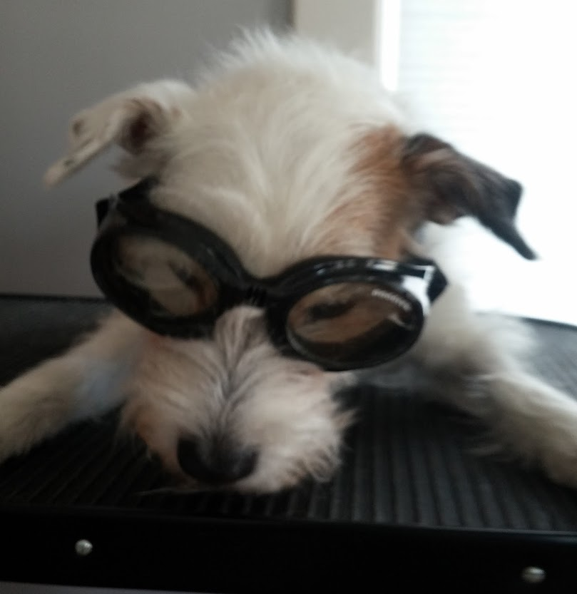 remy doggles march 2014.jpg