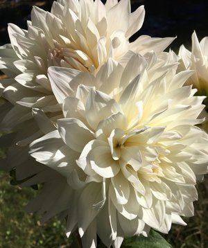 Fraylick Farm - Flowers