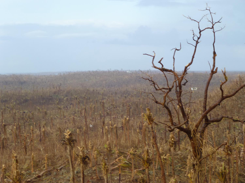 The changed landscape of Guiuan, Samar. (Photo by Criselda Yabes)