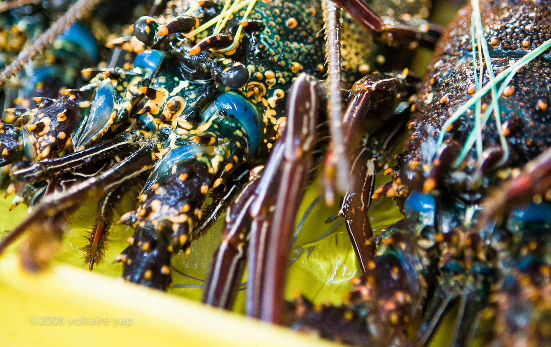Lobster at Salcedo Market, Makati
