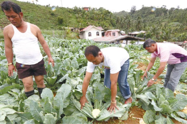 Farmer Jose Ruben (center) at his cauliflower farm in Sitio Bayabas. (Photo from SunStar Cebu)