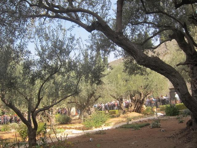 The Garden at Gethsemane  (Photo by Mona Lisa Yuchengco  )