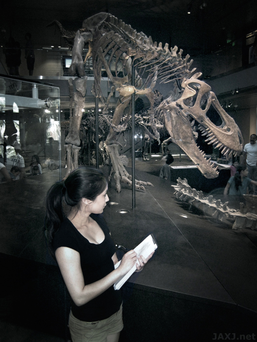 USC (University of Southern California) is conveniently close to the Natural History Museum of Los Angeles, which is where I spent hours studying from fossils and dioramas. Displayed are three T. rexes ages 2 years old, 13 years old, and 17 years old.