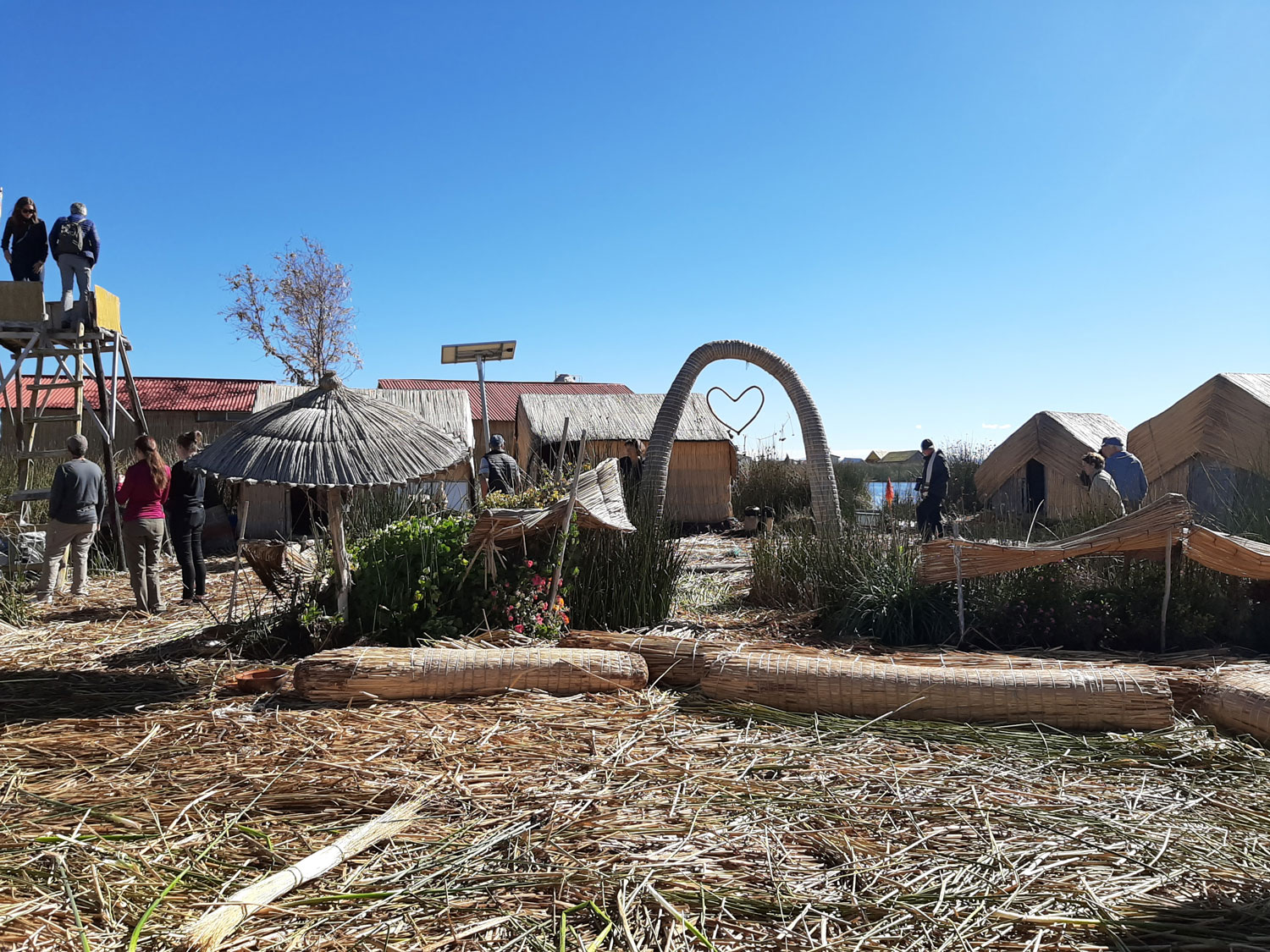 Uros islands are man-made from totora weeds that grow prolifically in Lake Titicaca (Photo by Bella Bonner)