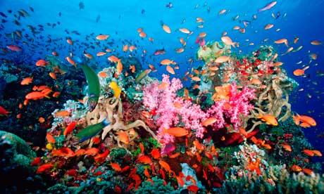 A reef off the coast of Panama