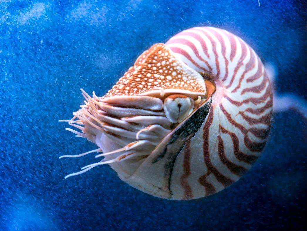 Photo from the Monterey Bay Aquarium website