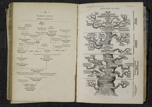 The Pedigree of Man. Ernst Haeckel, The evolution of man. London, 1879.    Copyright © The British Library