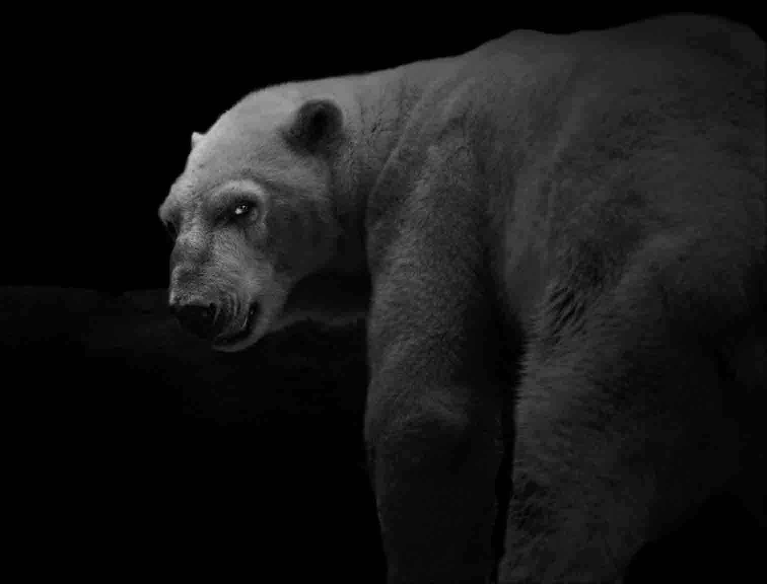 Animal (42)  ,2008. (c) Elliot Ross