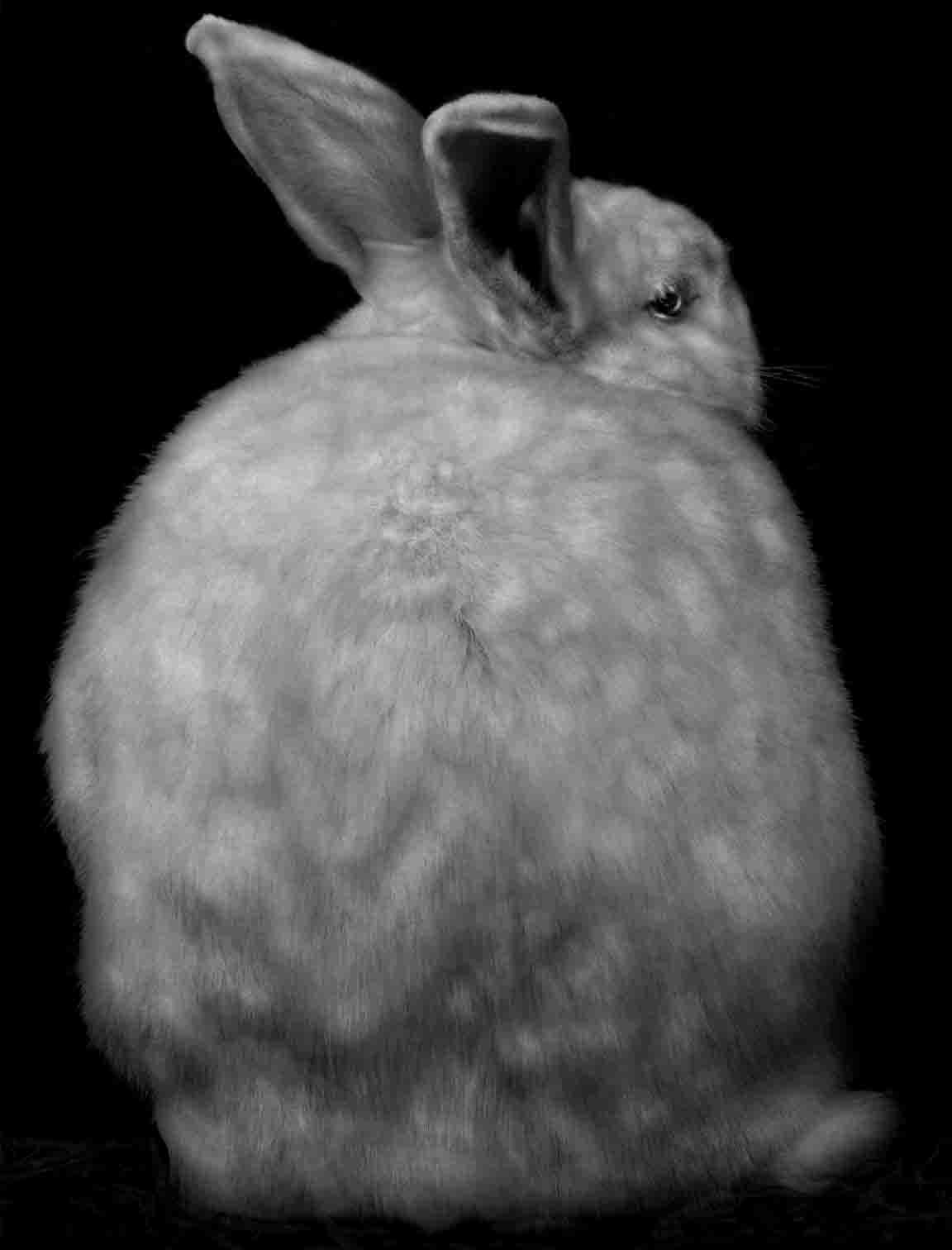 Animal (127)  ,2009. (c) Elliot Ross