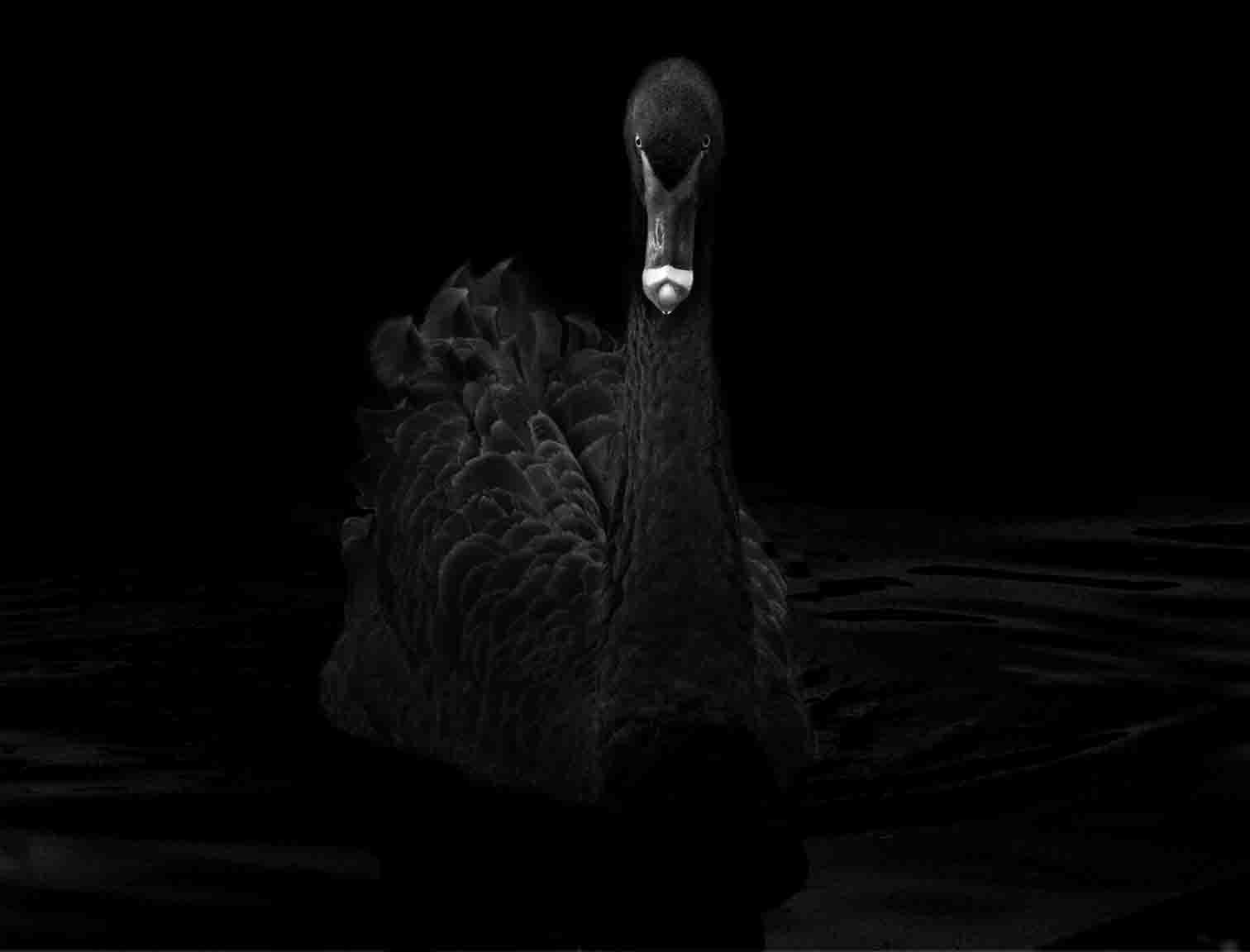 Animal (48)  ,2008. (c) Elliot Ross