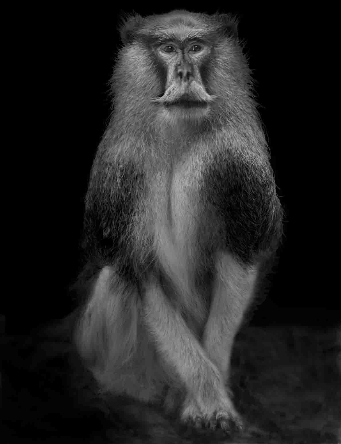 Animal (222). 2012. Copyright Elliot Ross. All rights reserved.jpg