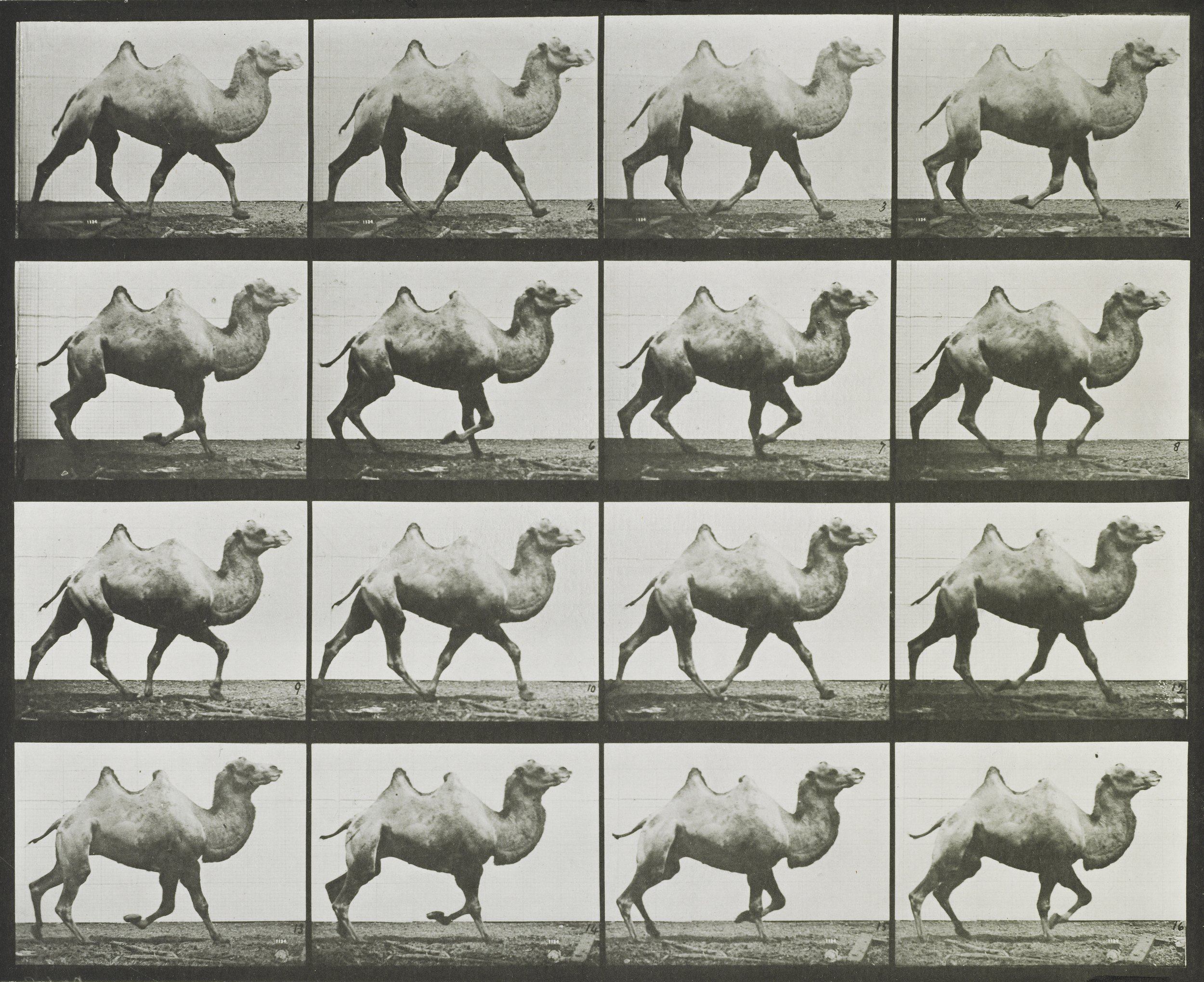 Eadweard Muybridge (1830-1904) Man performing a handstand on stairs 1887 Collotype © Victoria and Albert Museum, London