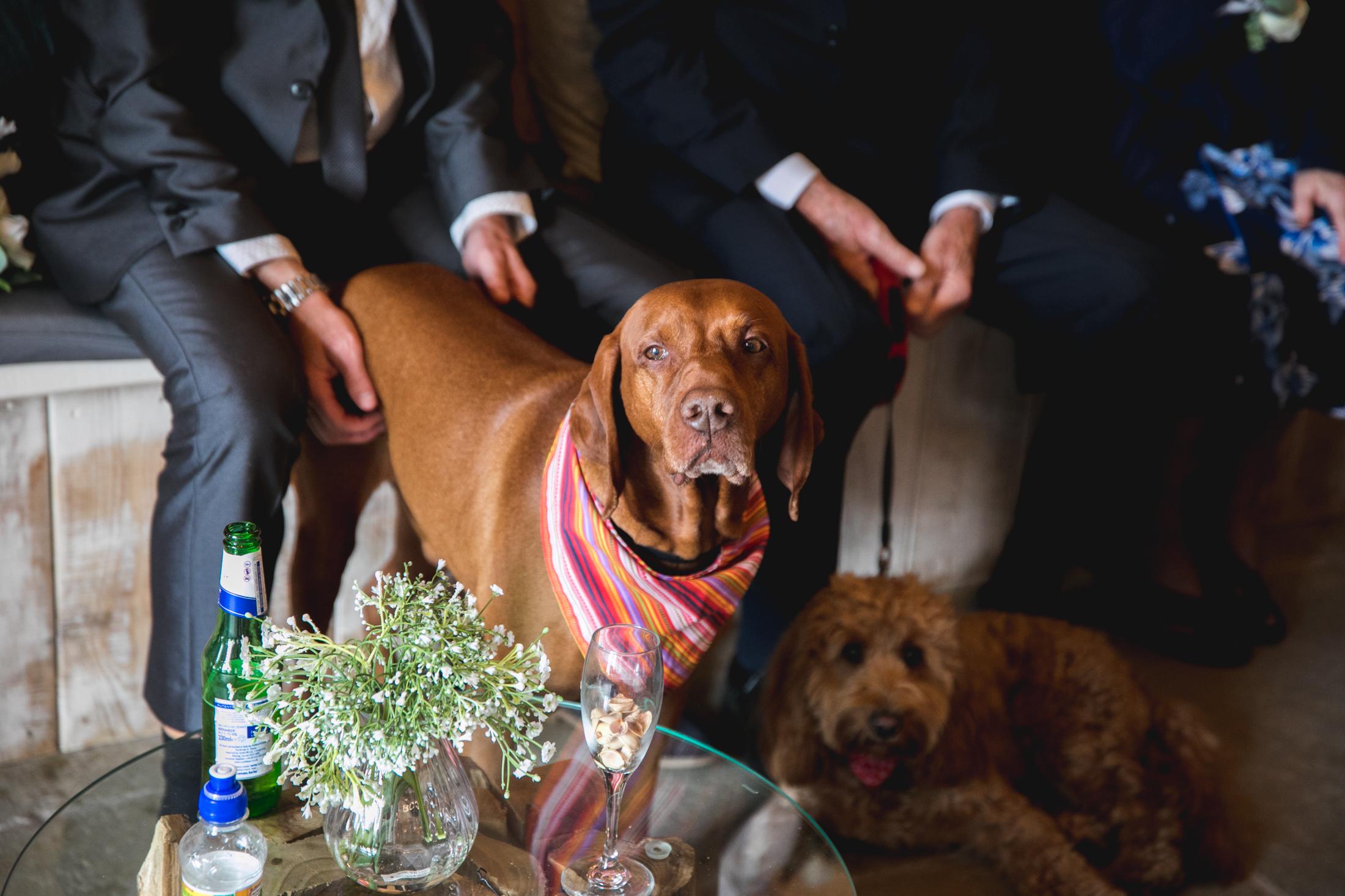 EDEN BARN WEDDING PHOTOGRAPHER-33.jpg