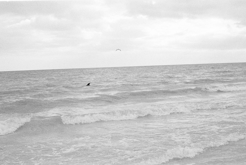 dolphin_bird.jpg