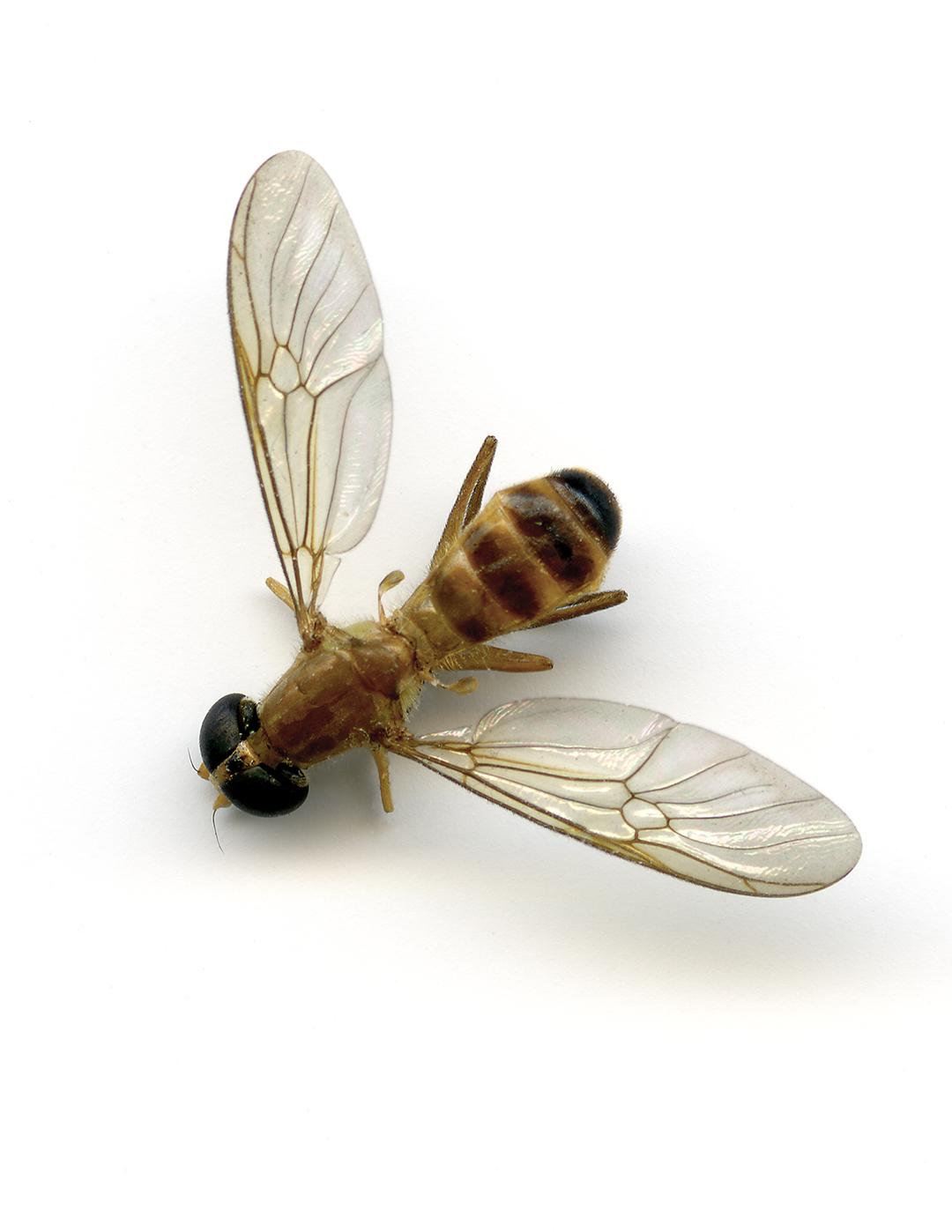 wasp print webiste.jpg