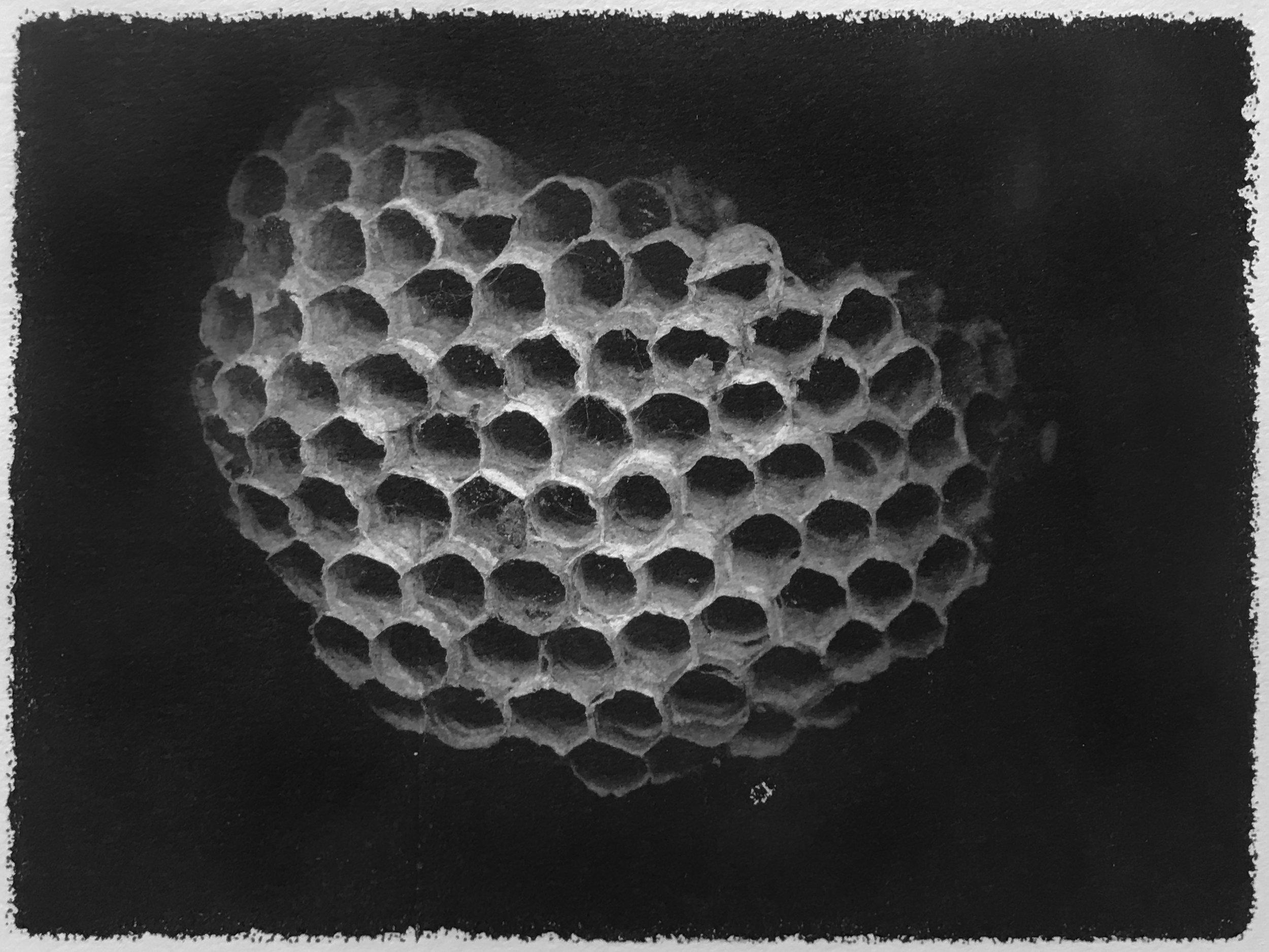 wasp nest01.JPG